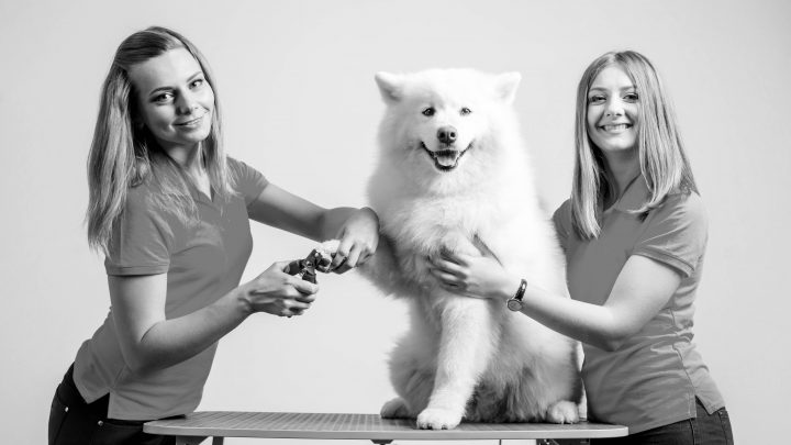 Starting a Dog Groomers Business: Everything you need to know